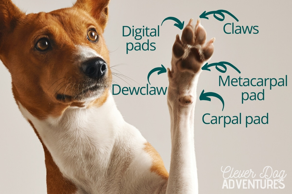7 Clever Ways To Protect Dog Paws While Hiking Wiring Diagram